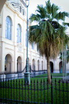 Palms and pillars