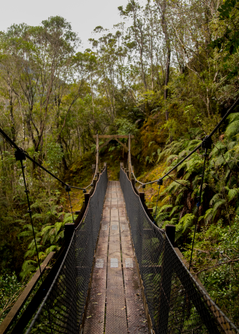 Lost in the rain-forest.