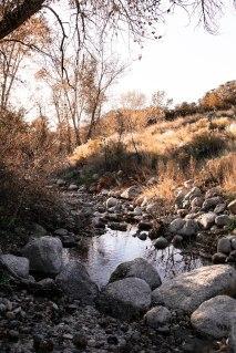 We found a little creek!