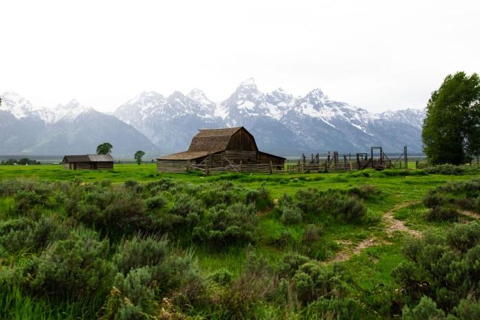 The iconic Mormon Row cabin.